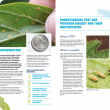 Example pages from the Tomato potato psyllid Enterprise management plan.