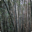 Grey and black stems of bamboo in a dense clump with shadows creating patterns on the stems.