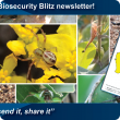 Get your Biosecurity Blitz newsletter