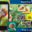 Report with MyPestGuide™ Reporter