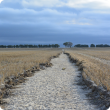 Paddock with eroded gully
