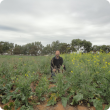 DAFWA Research Officer Martin Harries sitting in Geraldton Aphid Trial