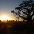 Kimberley sunrise