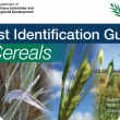 Frost ID Guide front cover with frozen wheat spikes at booting and flowering barley and oats