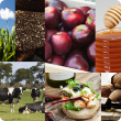 Collage of images showing different food products such as apples, honey, truffles, olive oil, bread