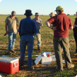 Discussion in a focus paddock at the end of a field walk