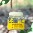 The Department of Agriculture and Food invites Kalgoorlie-Boulder residents to 'Adopt-a-Trap' to supplement its own surveillance and improve the detection and eradication of European wasp nests.