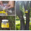 Fish lure being placedinsideEuropean wasp trap before hanging instreet tree