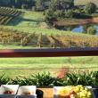 Vineyard and dam view