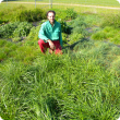 Three months of winter active Tall Fescue growth with farmer John Mottram at Manjimup WA. Photo taken prior to autumn pasture cuts at the beginning of June 2013