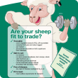 Checklist of what is necessary to make sheep fit to trade: are they traceable, safe to eat, free of disease, meet animal welfare requirements,