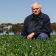 GRU Mark Seymour lentil trial at Kumarl 2017