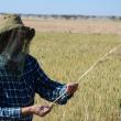 Man holding wheat sheaf in paddock