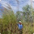 Man standing next to gamba grass infestation.