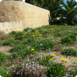Landscaped front verge with Gazania plants which have yellow daisy-like flowers.
