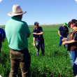 Geoff field walk at Moonyoonooka powdery mildew wheat August 2015