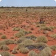 Hard spinifex, Uaroo land system