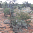 Hardpan Mulga Shrubland in the Yanganoo land system