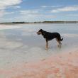 Dog standing on shoreline