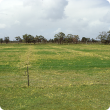 Sulphur fertilised plots showing increased production and improved clover content