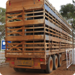 Semi trailer transport truck with four decks filled with sheep, driving out of the driveway out the farm gate with the back of the truck visible.