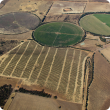 Aerial view of irrigated pastures in the Irwin River area