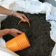 Nurseries may choose to buy in potting mix rather than making their own