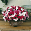 Bowl full of single flowers in shades of red, mid pink and light pink with a darker eye.