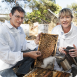 Department of Agriculture and Food officers Dr Rob Manning and Darlene Mallett check a beehive for disease and hive pests like small hive beetle and varroa mites.