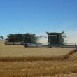 two headers harvesting side by side