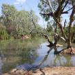 Keep River showing healthy fringing vegetation