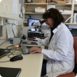 Laboratory staff viewing worm larvae
