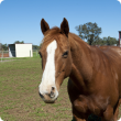 brown and white horse standing in a paddock