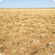 Mitchell grass plains pasture in the Inverway land system