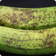 Banana freckle symptoms on banana fruit