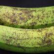 Banana freckle symptoms on banana fruit