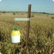 Native budworm trap