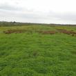 pasture crop