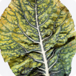 Leaf with yellow and green mottling.