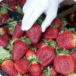 Gloved hand handling punnet of strawberries