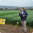 Dr Pamela Zwer standing in front of trial plots of oats in spring 2013 at the release of the new variety Williams