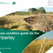 Photo caption: The Pasture condition guide for the Kimberley includes information for pastoralists on the 17 most common pasture types throughout the Kimberley.