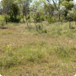 Photograph of Pindan pasture in the Kimberley in fair condition