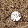 RIFA ants on 10 cent coin