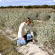 Photograph of farmer inspecting a saltbush planting