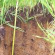 soil organic matter layer