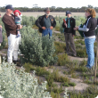 Interested onlookers listen to Dr Hayley Norman from CSIRO explain the attributes of the new elite cultivars of old man saltbush