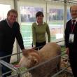 Sheep Updates 2014