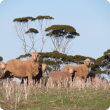 Ewe and lamb standing in stubble.