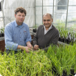 Two men in front of pots with barley plants